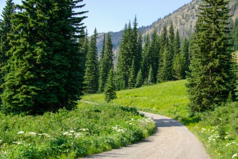 Harts Pass Road through a meadow