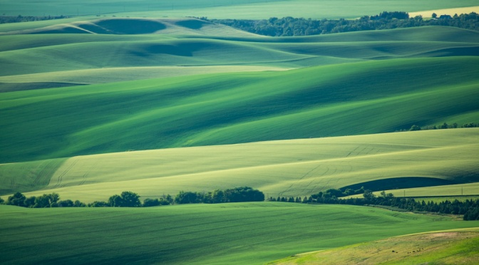 Walla Walla Wheat Fields